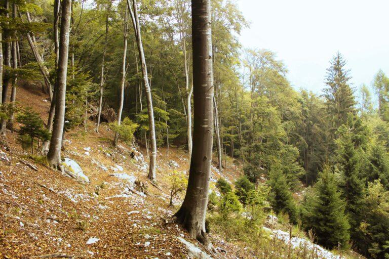 sentiero contrade basse tonezza
